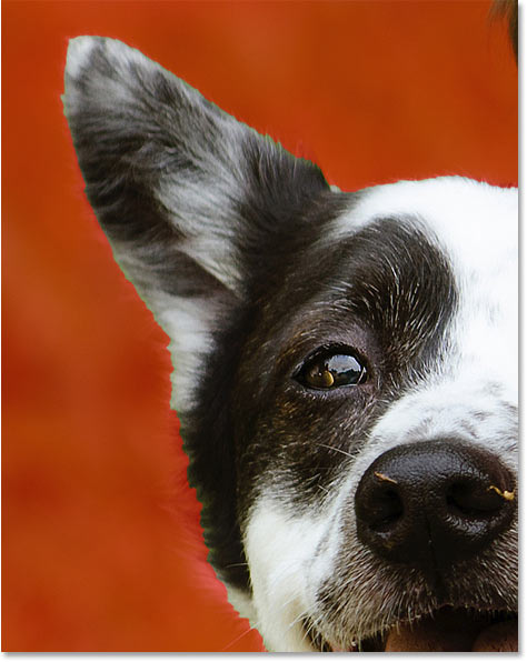 Select Subject in Photoshop CC 2020 made only a basic selection of the dog's fur