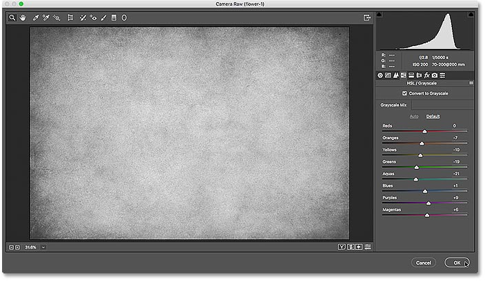 The Camera Raw Filter dialog box showing a preview of the grayscale conversion