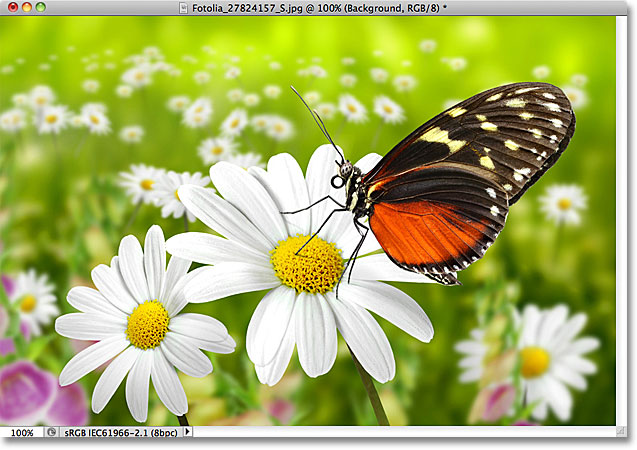 A photo of a butterfly. Image licensed from Fotolia by Photoshop Essentials.com