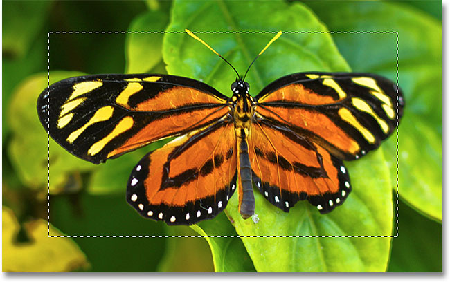 The initial selection around the butterfly.