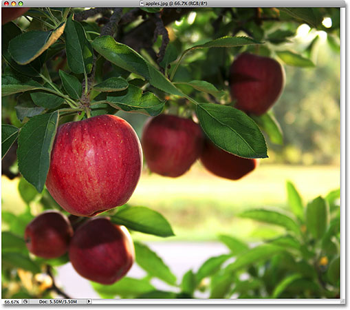 A photo of apples. Image licensed from iStockphoto by Photoshop Essentials.com