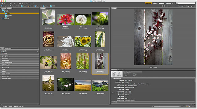 The Content panel is again showing all images in the folder. Image © 2015 Photoshop Essentials.com