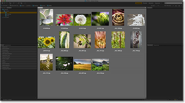 The Content panel in Adobe Bridge. Image © 2015 Photoshop Essentials.com