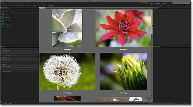 The thumbnails in the Content panel are now much larger. Image © 2015 Photoshop Essentials.com