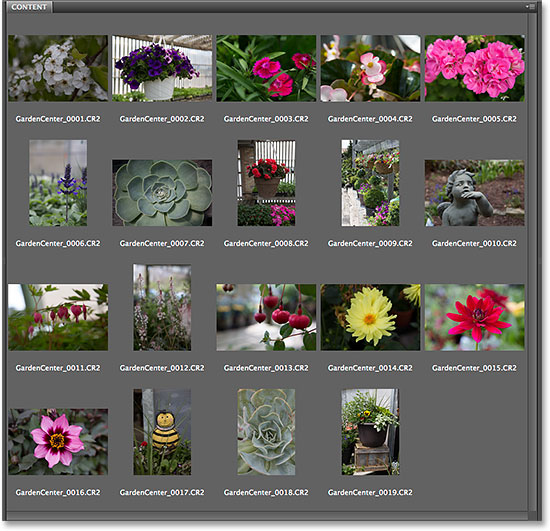 Renaming files with the Batch Rename feature in Adobe Bridge CS6. Image © 2014 Photoshop Essentials.com