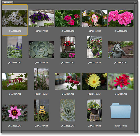 Selecting the first image in the Content panel in Adobe Bridge CS6. Image © 2014 Photoshop Essentials.com