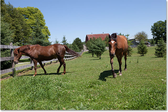 A second photo of the same horses, with a better view of the horse on the left.