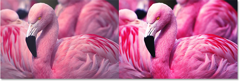 A comparison of the color saturation after increasing image contrast in Photoshop