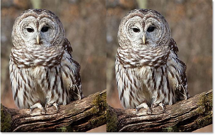A side by side comparison of the image before and after sharpening with the High Pass filter in Photoshop