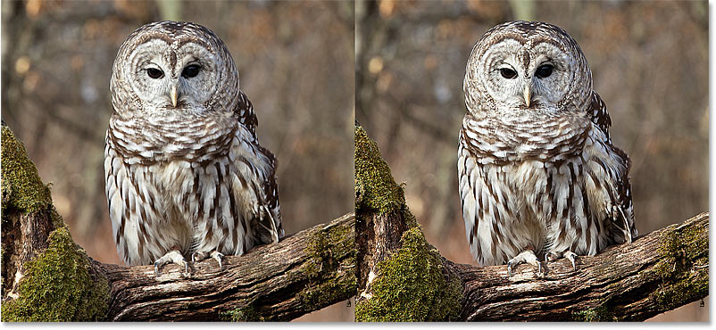 A comparison of the image sharpening results using High Pass with the Hard Light and Linear Light blend modes in Photoshop