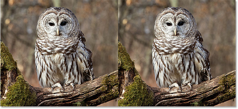Sharpen Images in Photoshop with the High Pass filter