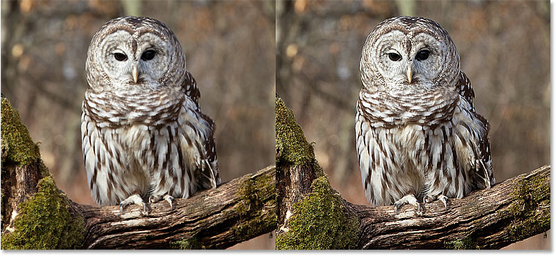 Comparing the original and sharpened versions of the image in Photoshop