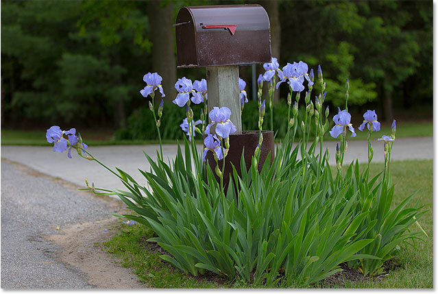 A mailbox surrounded by purple flowers.