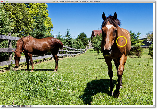 Moving the eyedropper icon over one of the horses in the photo. Image © 2012 Photoshop Essentials.com