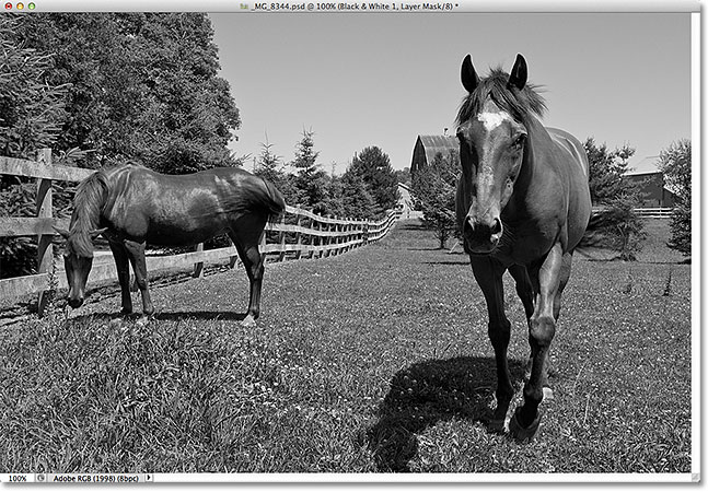 The photo has been converted from color to black and white. Image © 2012 Photoshop Essentials.com