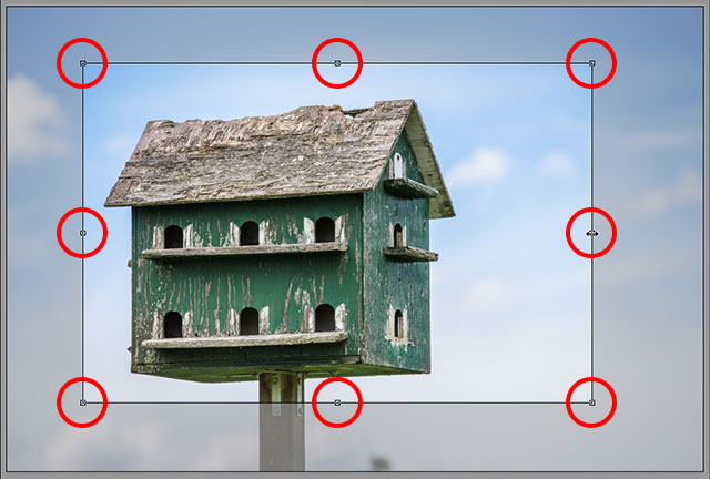 Click and drag any of the handles to resize the crop box. Image © 2013 Steve Patterson, Photoshop Essentials.com