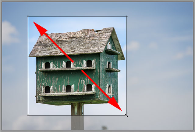 Drawing a crop box as a perfect square. Image © 2013 Steve Patterson, Photoshop Essentials.com