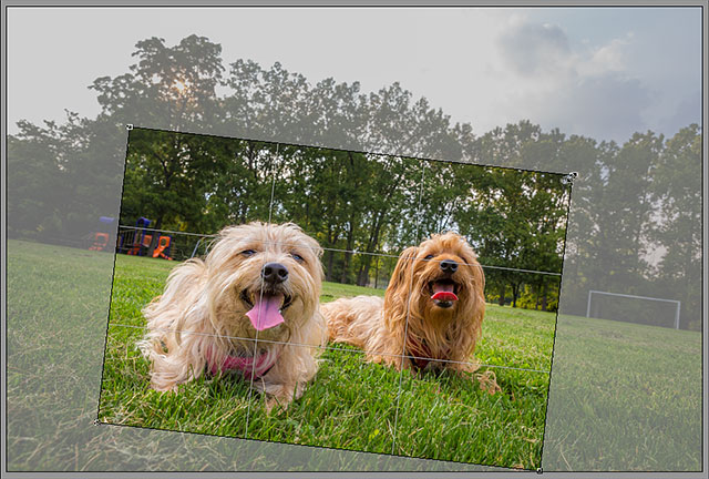 Resizing the cropping border in Camera Raw.