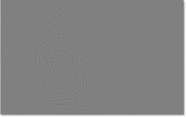 The High Pass filter fills the image with neutral gray.