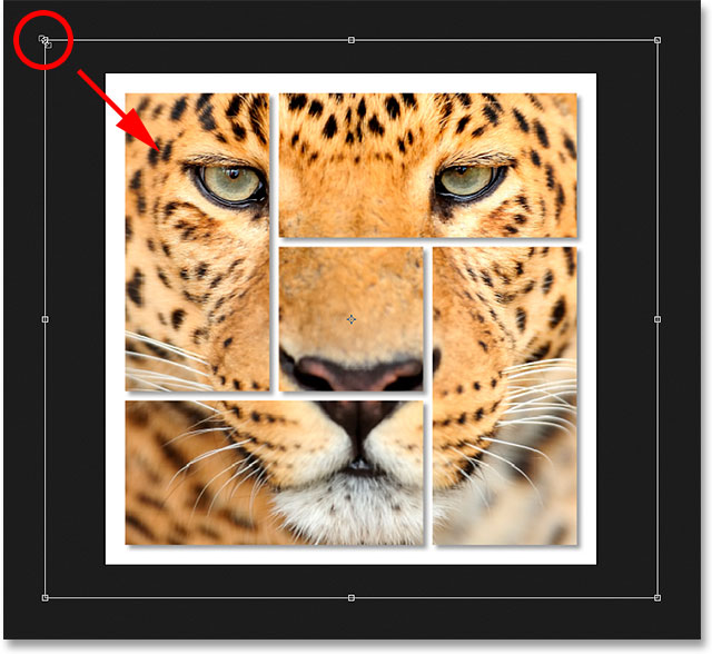 Resizing the photo inside the shapes using Free Transform.