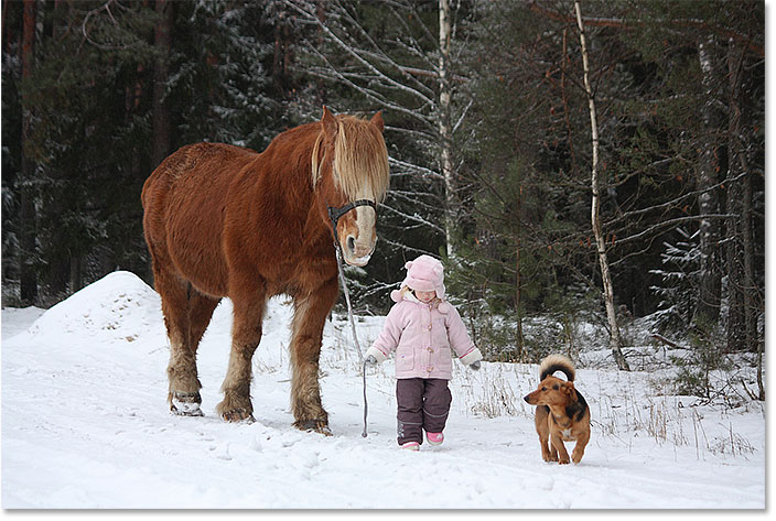 Cute little girl leading big draught horse and small dog by the forest in winter. Image 128681366 licensed from Shutterstock by Photoshop Essentials.com