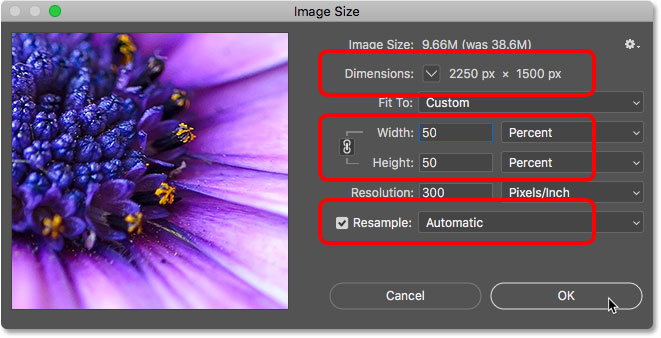 Resampling the image to 50 percent of its original size in Photoshop
