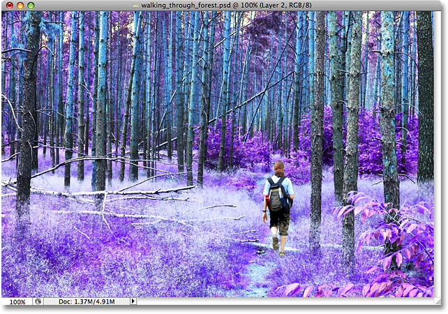 The contrast in the image has been increased with the Overlay blend mode. Image © 2009 Photoshop Essentials.com.