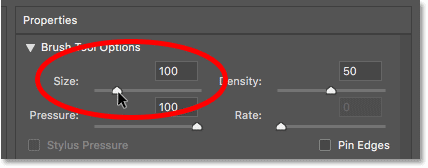 Setting the Liquify filter brush size to 100 pixels